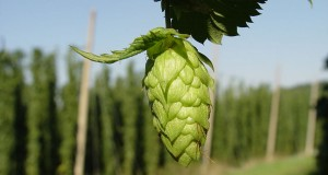 Beer Belly: The Greenbelt's Bursting Beer Industry