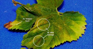 Insecticide/Miticide label expanded for control of  spider mites on hops