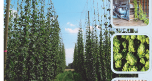 Hop Research Field Day/Twilight Meeting 23 July, 2015