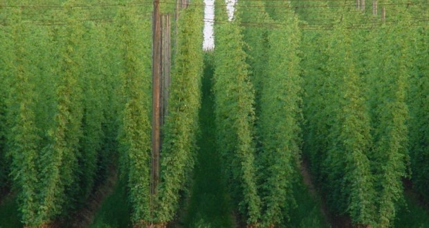 2016 hops growing workshops and field days