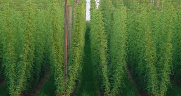 2016 hops workshops - Ontario Hop Growers' Association.